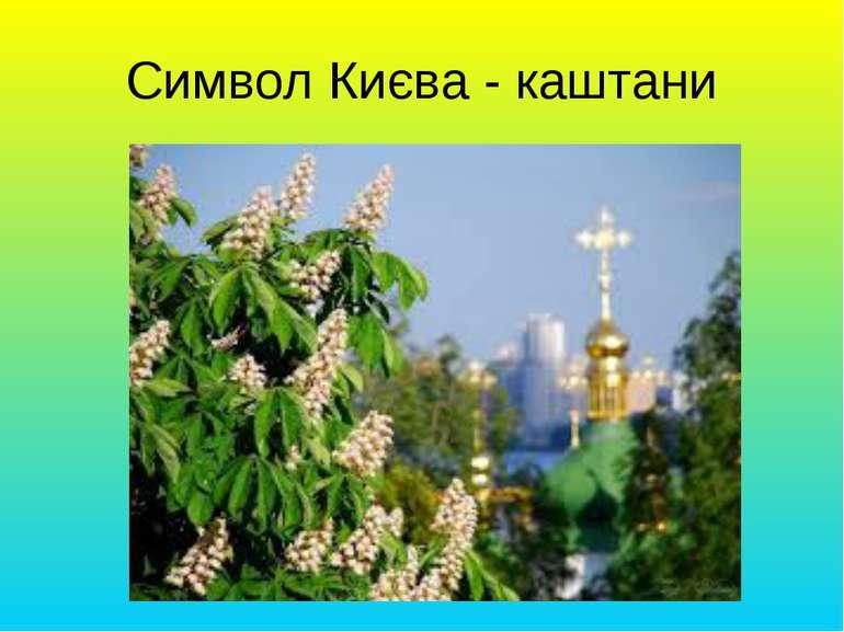 Символ Києва - каштани
