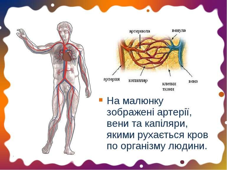 На малюнку зображені артерії, вени та капіляри, якими рухається кров по орган...
