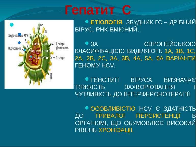 Гепатит С ЕТІОЛОГІЯ. ЗБУДНИК ГС – ДРІБНИЙ ВІРУС, РНК-ВМІСНИЙ. ЗА ЄВРОПЕЙСЬКОЮ...