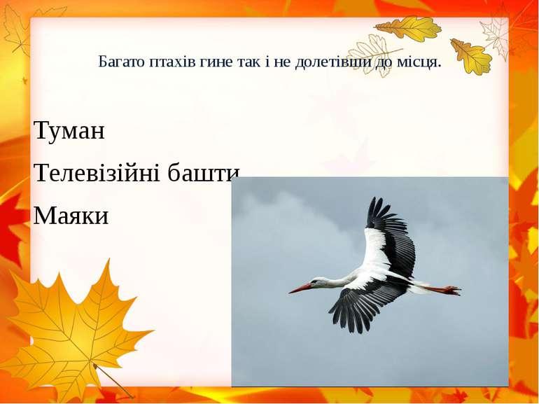 Багато птахів гине так і не долетівши до місця. Туман Телевізійні башти Маяки