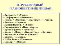 ОТРУБЕВИДНЫЙ (РАЗНОЦВЕТНЫЙ) ЛИШАЙ «Антиокс+» + «Урсул» «Сэйф-ту-си» + «Шевито...
