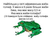 Найбільша у світі африканська жаба-голіаф. Її маса в 6 разів більше жаби-бика...