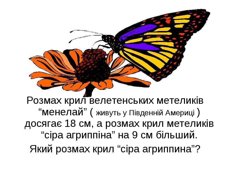 """Розмах крил велетенських метеликів """"менелай"""" ( живуть у Південній Америці ) д..."""
