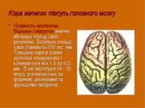 Кора великих півкуль головного мозку Наявність численних борозен і закруток з...