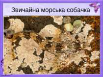 Звичайна морська собачка