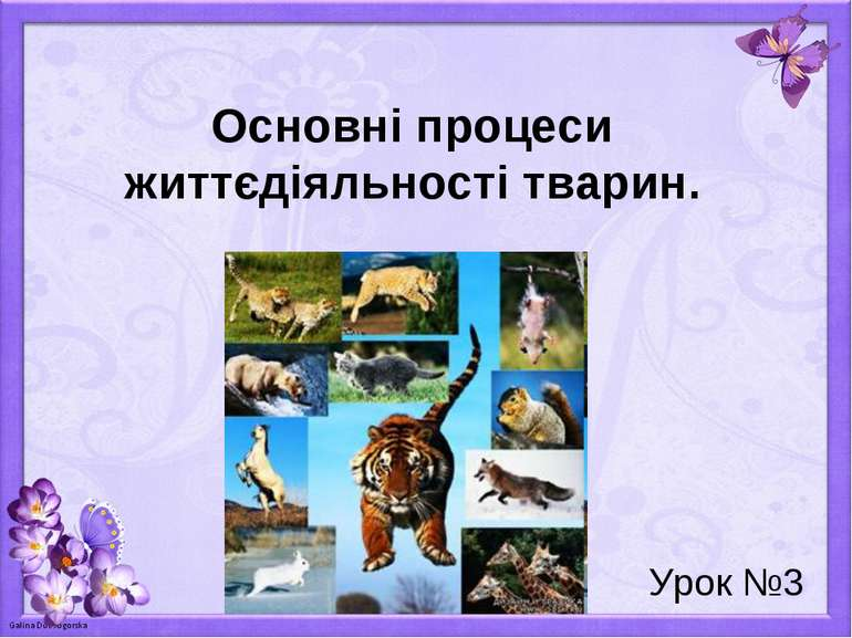 Основні процеси життєдіяльності тварин. Урок №3