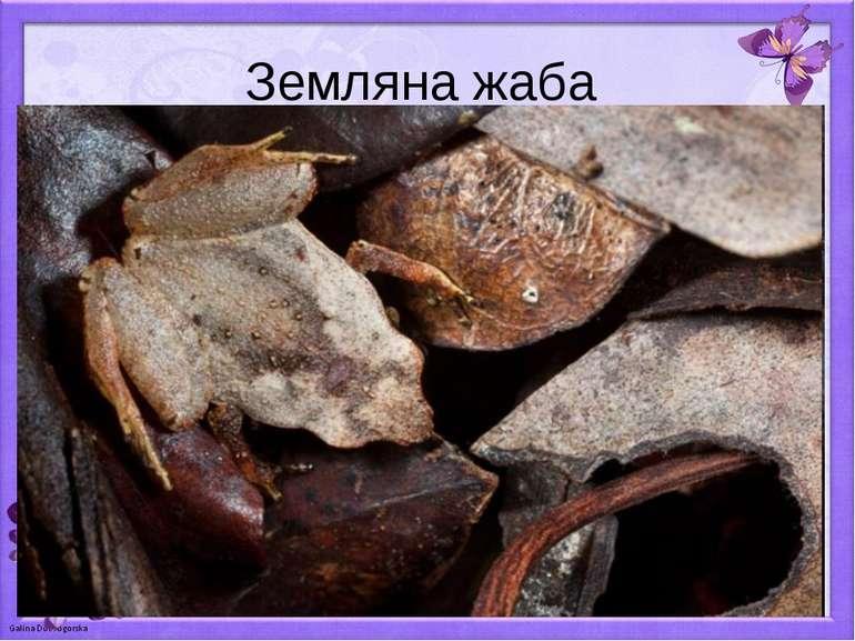 Земляна жаба
