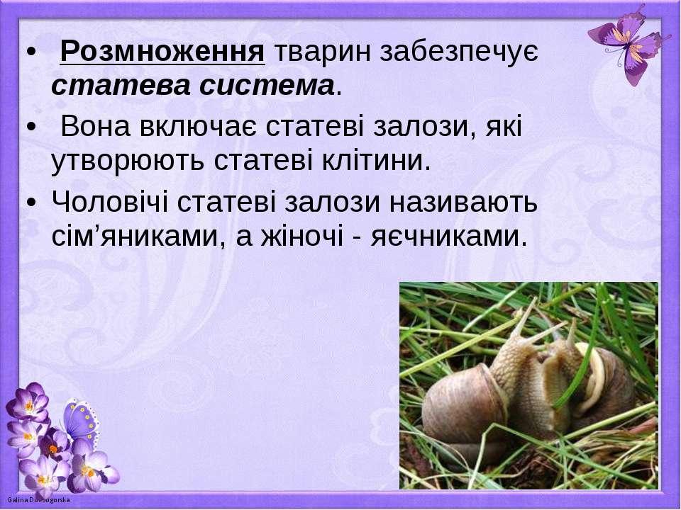 Розмноження тварин забезпечує статева система. Вона включає статеві залози, я...