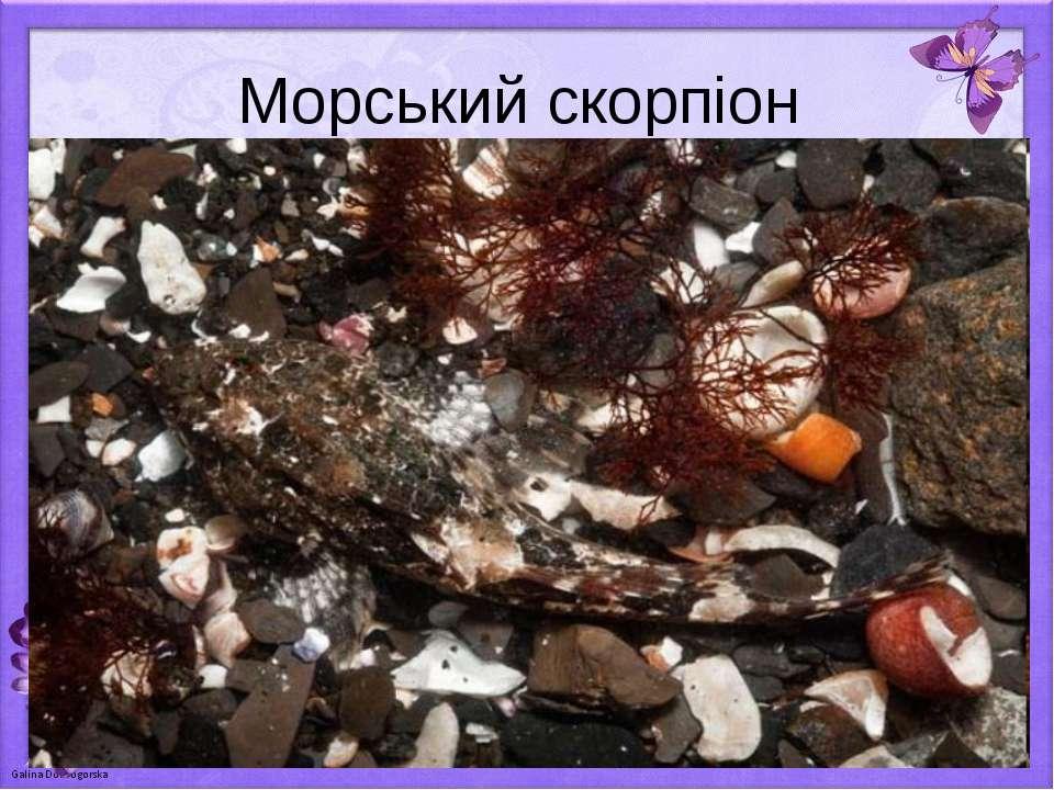 Морський скорпіон