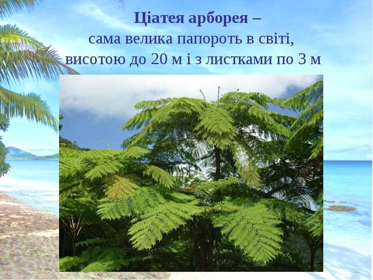 Ціатея арборея – сама велика папороть в світі, висотою до 20 м і з листками п...