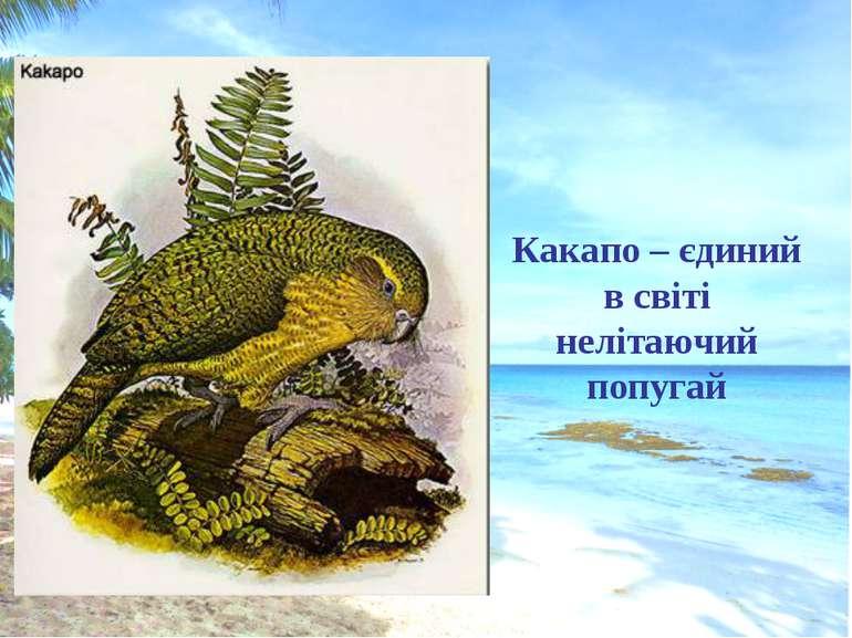 Какапо – єдиний в світі нелітаючий попугай