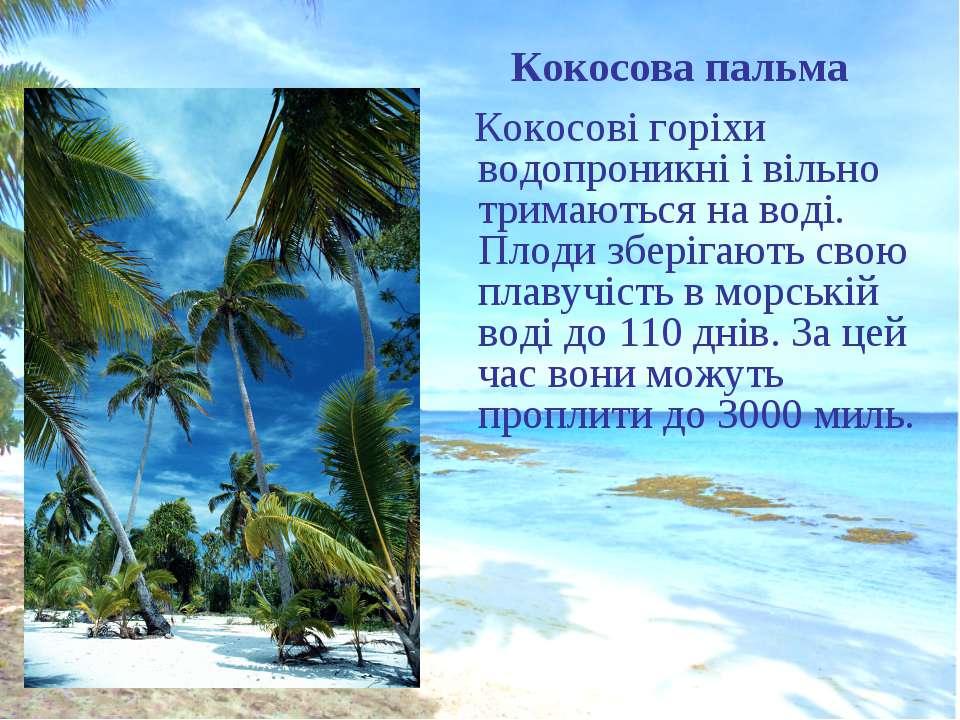 Кокосова пальма Кокосові горіхи водопроникні і вільно тримаються на воді. Пло...