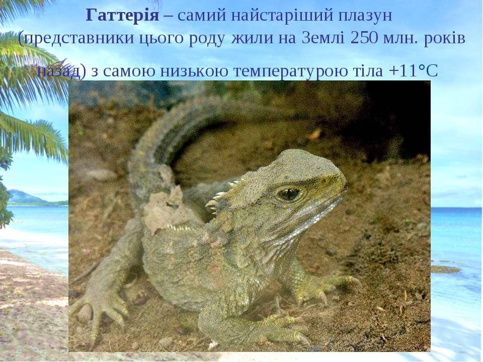 Гаттерія – самий найстаріший плазун (представники цього роду жили на Землі 25...