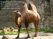 Бедный маленький верблюд: Есть ребёнку не дают. Он сегодня съел с утра Только...