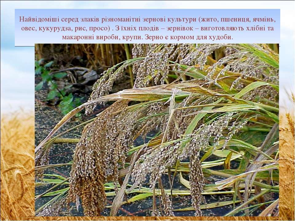 Найвідоміші серед злаків різноманітні зернові культури (жито, пшениця, ячмінь...