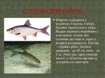 Широко поширена у водоймах Європи, Сибіру, басейні Аральського моря. Віддає п...