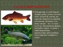 Поширений по всій Євразії. Зграйна риба, уникає сильної течії, полюбляє заток...