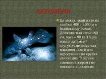 Це хижак, який живе на глибині 400 – 1000 м в Індійському океані. Довжина тіл...