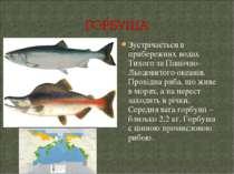 Зустрічається в прибережних водах Тихого та Північно-Льодовитого океанів. Про...