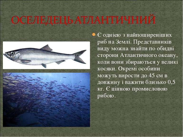 Є однією з найпоширеніших риб на Землі. Представників виду можна знайти по об...
