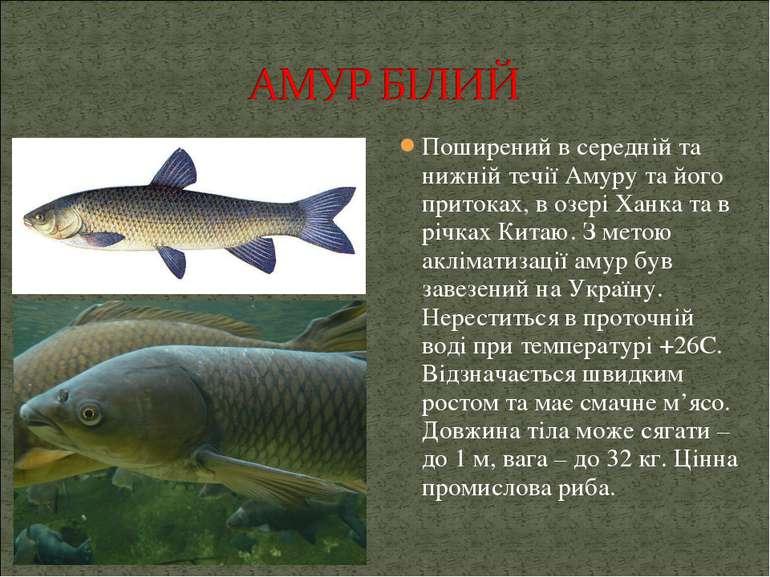 Поширений в середній та нижній течіїАмуру та його притоках, в озері Ханка та...