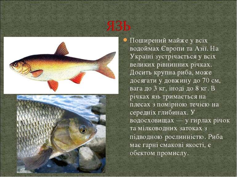 Поширений майже у всіх водоймах Європи та Азії. На Україні зустрічається у вс...
