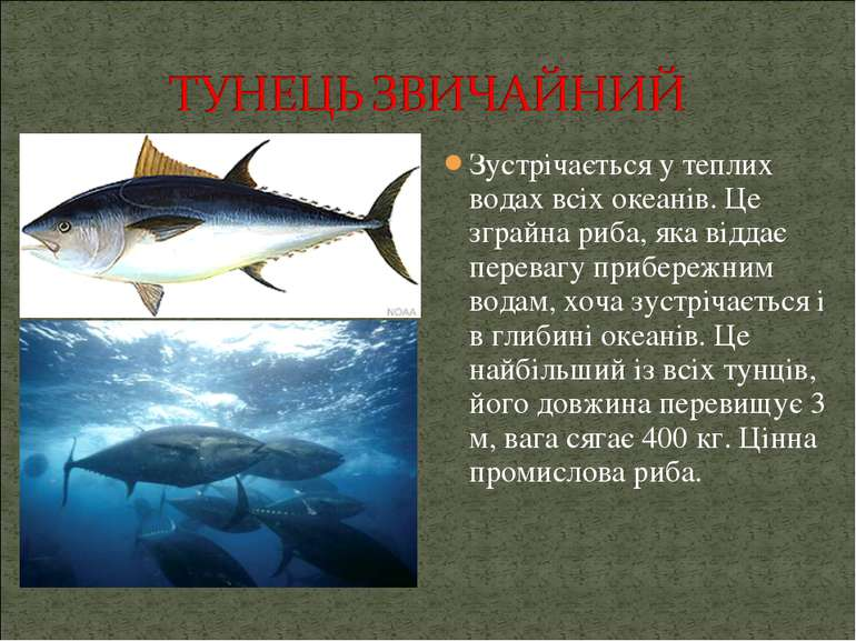 Зустрічається у теплих водах всіх океанів. Це зграйна риба, яка віддає перева...
