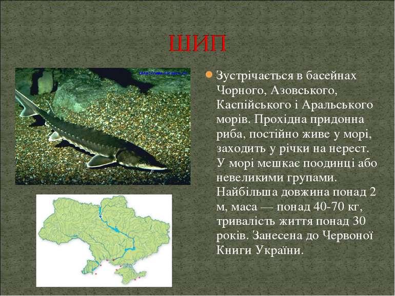 Зустрічається в басейнах Чорного, Азовського, Каспійського і Аральського морі...