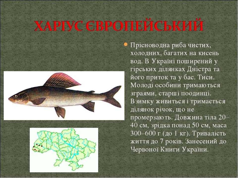 Прісноводна риба чистих, холодних, багатих на кисень вод. В Україні поширений...