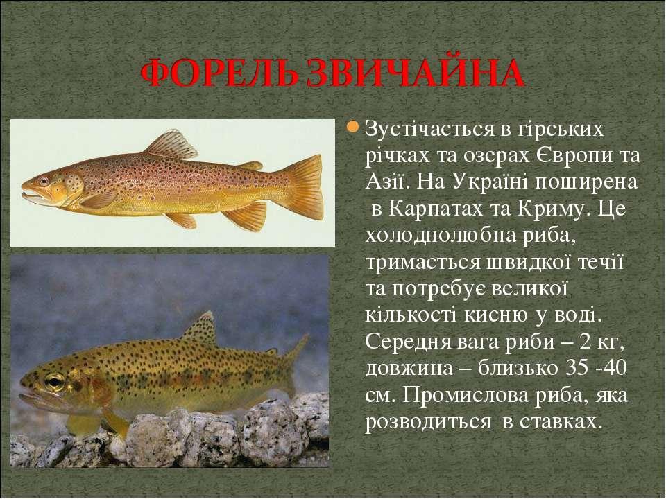 Зустічається в гірських річках та озерах Європи та Азії. На Україні поширена ...