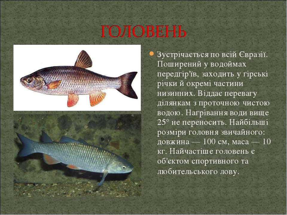 Зустрічається по всій Євразії. Поширений у водоймах передгір'їв, заходить у г...