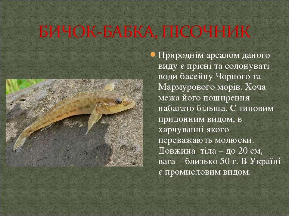 Природнім ареалом даного виду є прісні та солонуваті води басейну Чорного та ...