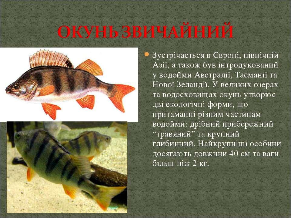 Зустрічається в Європі, північній Азії, а також був інтродукований у водойми ...