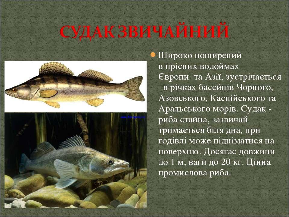 Широко поширений впріснихводоймах ЄвропитаАзії, зустрічається в річках б...