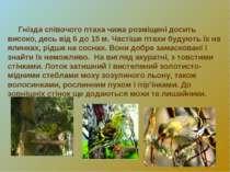Гнізда співочого птаха чижа розміщені досить високо, десь від 6 до 15 м. Част...