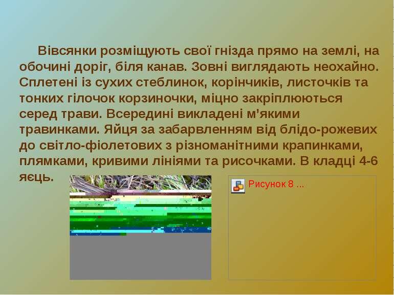 Вівсянки розміщують свої гнізда прямо на землі, на обочині доріг, біля канав....