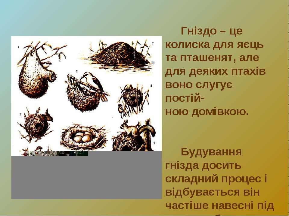 Гніздо – це колиска для яєць та пташенят, але для деяких птахів воно слугує п...
