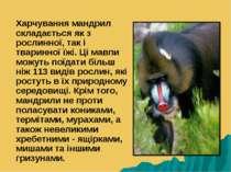 Харчування мандрил складається як з рослинної, так і тваринної їжі. Ці мавпи ...