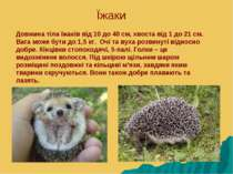 Їжаки Довжина тіла їжаків від 10 до 40 см, хвоста від 1 до 21 см. Вага може б...