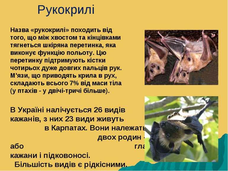 В Україні налічується 26 видів кажанів, з них 23 види живуть в Карпатах. Вони...