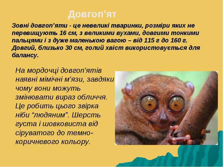 Зовні довгоп'яти - це невеликі тваринки, розміри яких не перевищують 16 см, з...