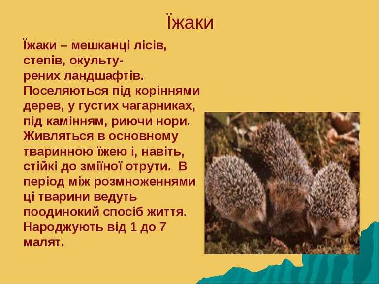 Їжаки Їжаки – мешканці лісів, степів, окульту- рених ландшафтів. Поселяються ...
