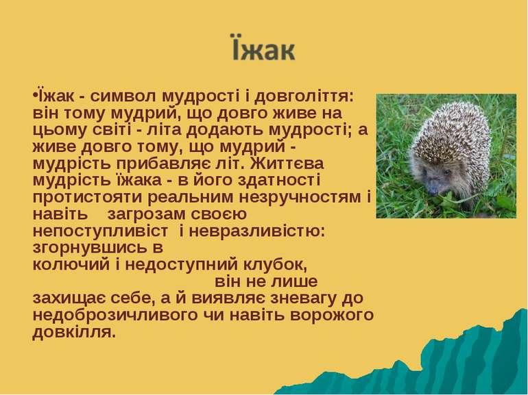 Їжак - символ мудрості і довголіття: він тому мудрий, що довго живе на цьому ...