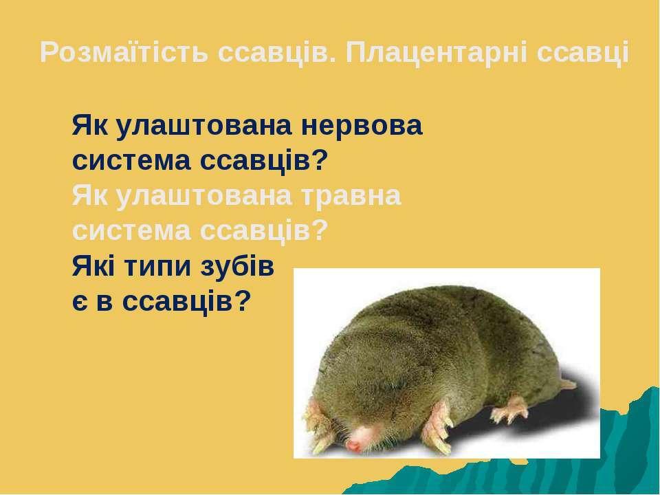 Розмаїтість ссавців. Плацентарні ссавці Як улаштована нервова система ссавців...