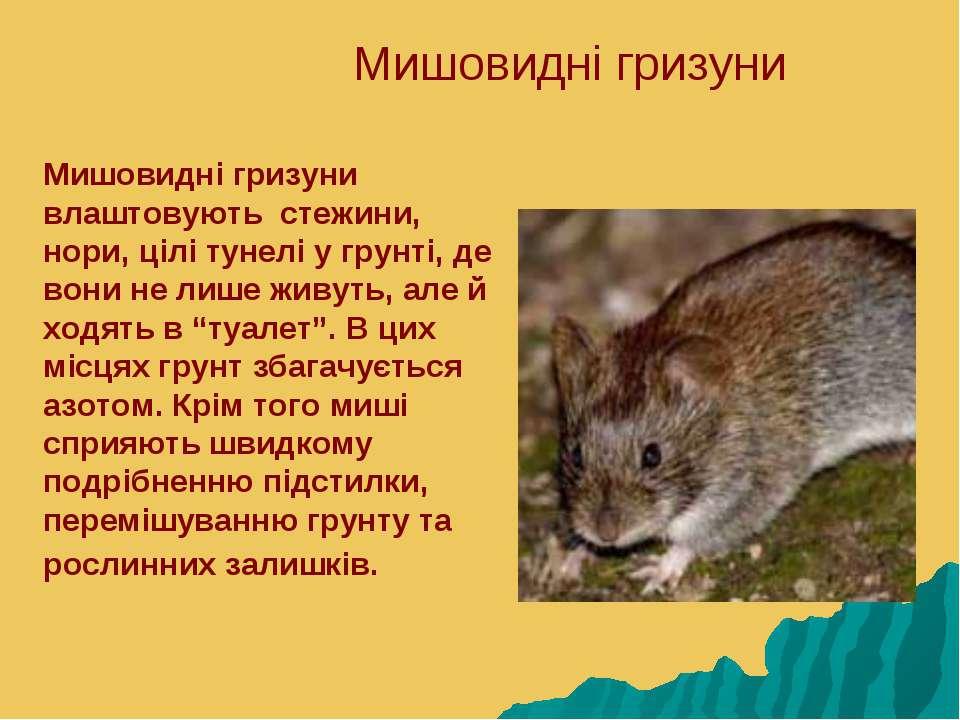 Мишовидні гризуни Мишовидні гризуни влаштовують стежини, нори, цілі тунелі у ...