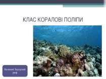 КЛАС КОРАЛОВІ ПОЛІПИ Великий Барєрний риф