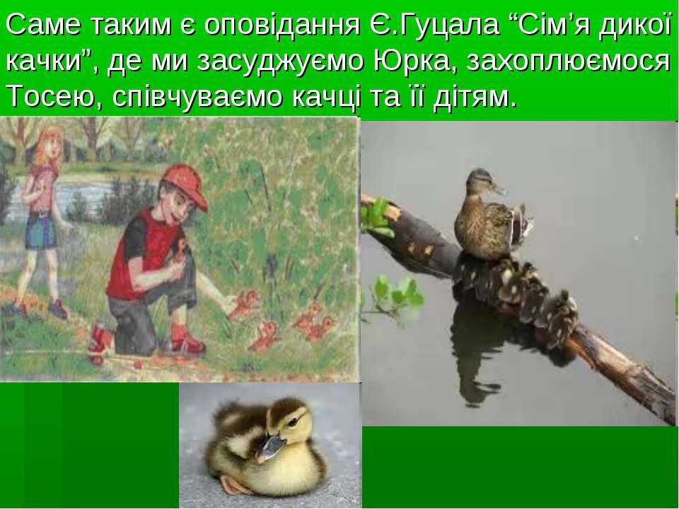"""Саме таким є оповідання Є.Гуцала """"Сім'я дикої качки"""", де ми засуджуємо Юрка, ..."""