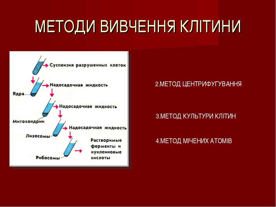 МЕТОДИ ВИВЧЕННЯ КЛІТИНИ 2.МЕТОД ЦЕНТРИФУГУВАННЯ 3.МЕТОД КУЛЬТУРИ КЛІТИН 4.МЕТ...