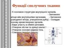 Функції сполучних тканин - Є основою структури внутрішніх органів. - Заповнює...