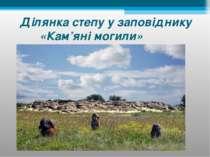 Ділянка степу у заповіднику «Кам'яні могили»